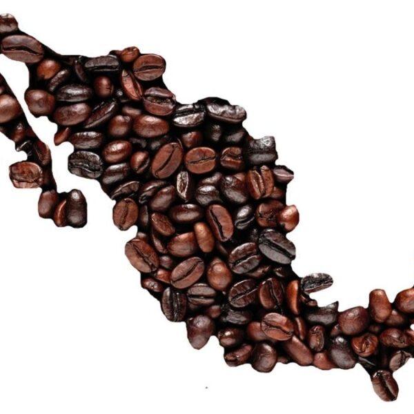 Variedades de café cultivadas en México