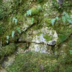 SSRC Rock and Moss