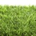 Zoysia Turf In Sarasota and Manatee Counties
