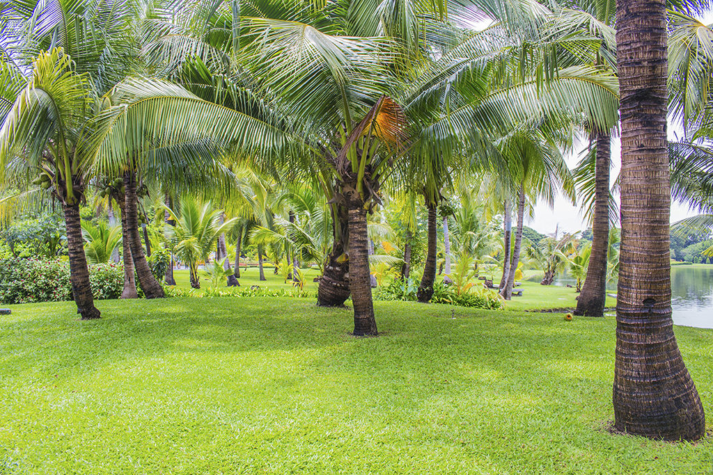 Coconut orchards and green grass.