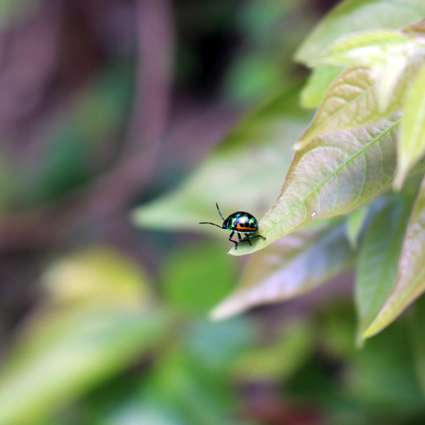 photos-services-safer-pest-control
