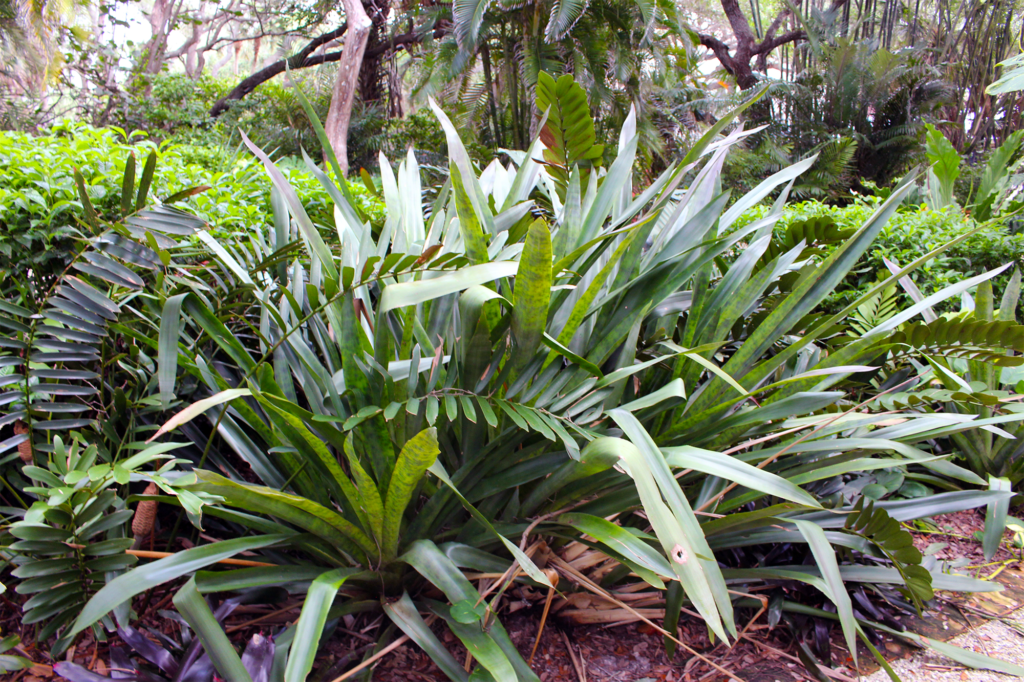 green-edge-florida-tropical-plants