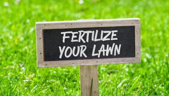 Responsible Fertilizing In Water-Sensitive Sarasota