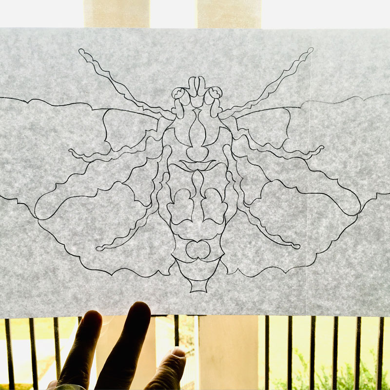 Astro Moth pencil line art