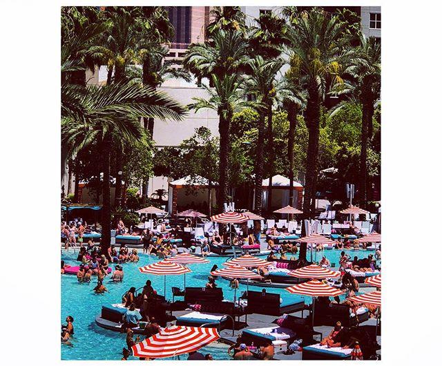 pool-party flamingo-style in VEGAS BABY! best way to #keepcool @theflamingolasvegas #easylikesundaymorning #desertbliss