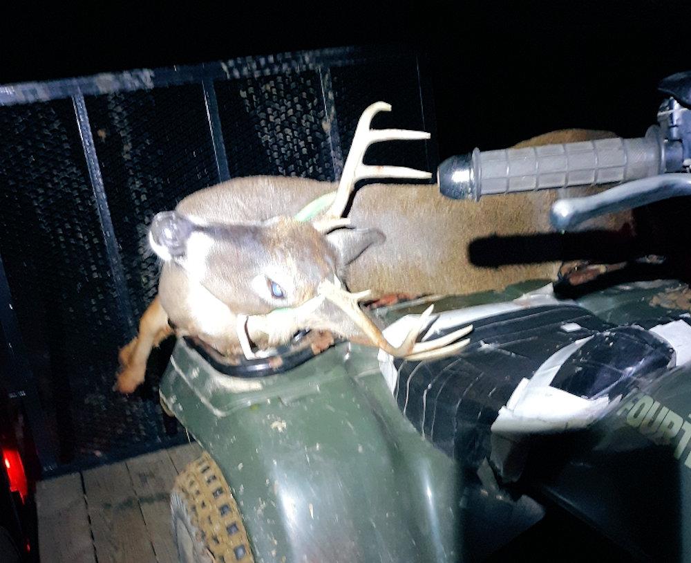 Nice Deer