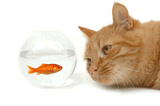 cat staring at fish in fishbowl