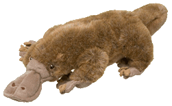 platypus stuffy