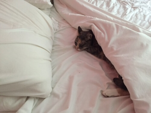 lucy-under-the-covers