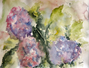 hydrangeas watercolor painted by Sami