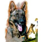 Schutzhound Shepherd