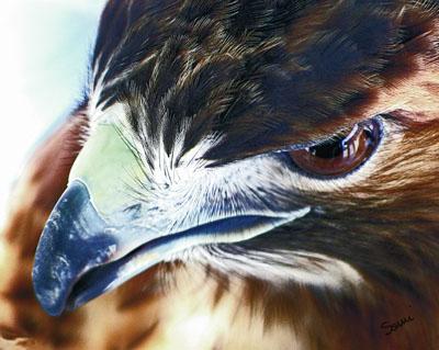 Birds of Prey & Updates