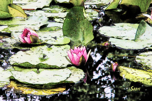 Monetwaterlilies03