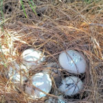 eggs_4654