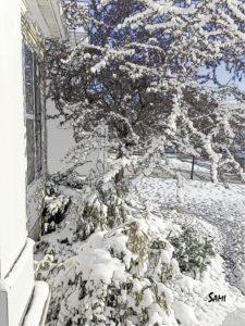 snow_4366