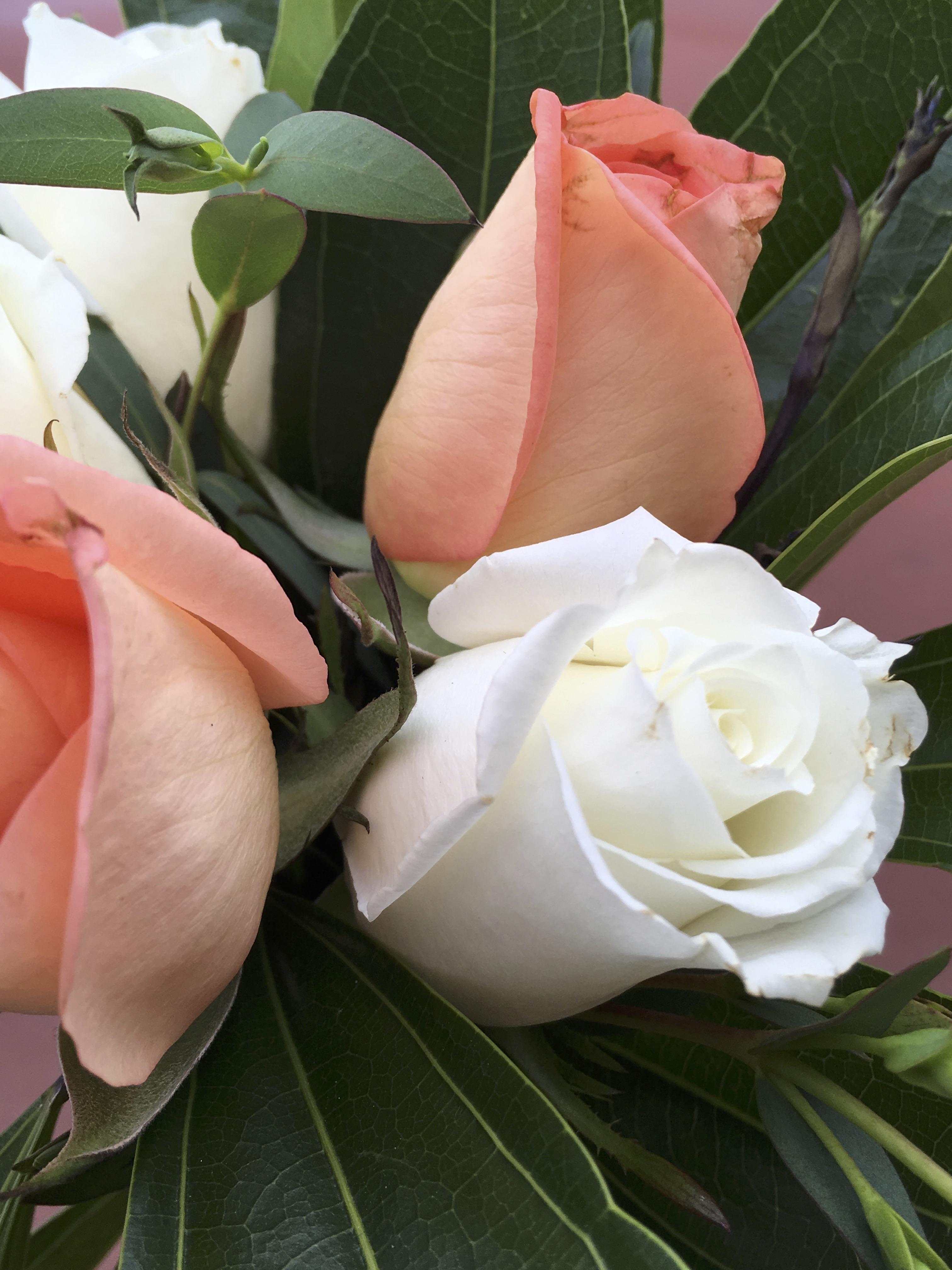 Flowers, Ducks & Grandbabies