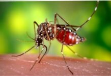 yellow fever outbreak in enugu