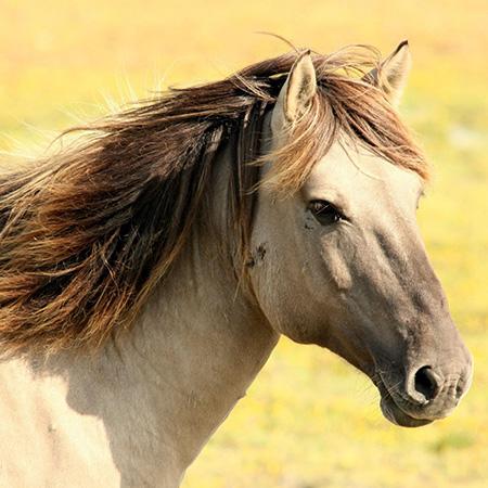 East Coast Equine Veterinary Service, LLC.