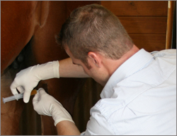 East Coast Equine Veterinary Service, LLC.