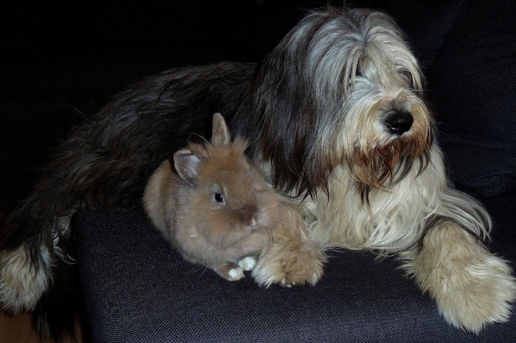 """Lucky"" (the bunny) and ""Nelly"" (the dog)"