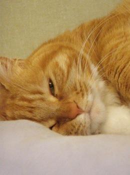 CAT BOARDING - Just Pet Me
