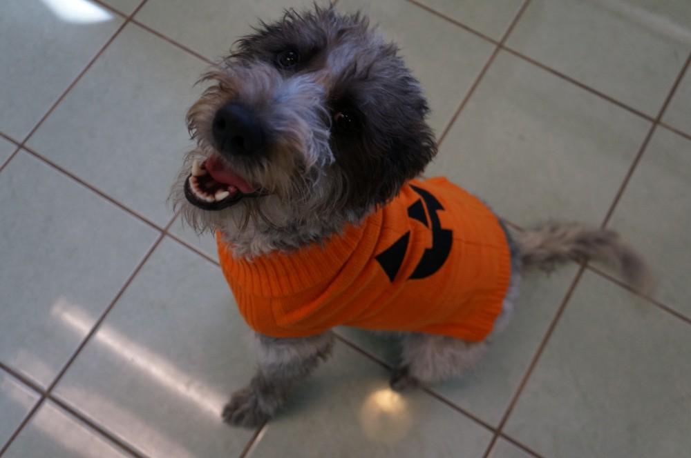 Laverne the Pumpkin