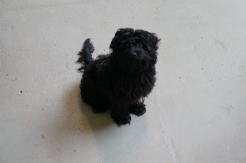 Dog of the Week: Zeus
