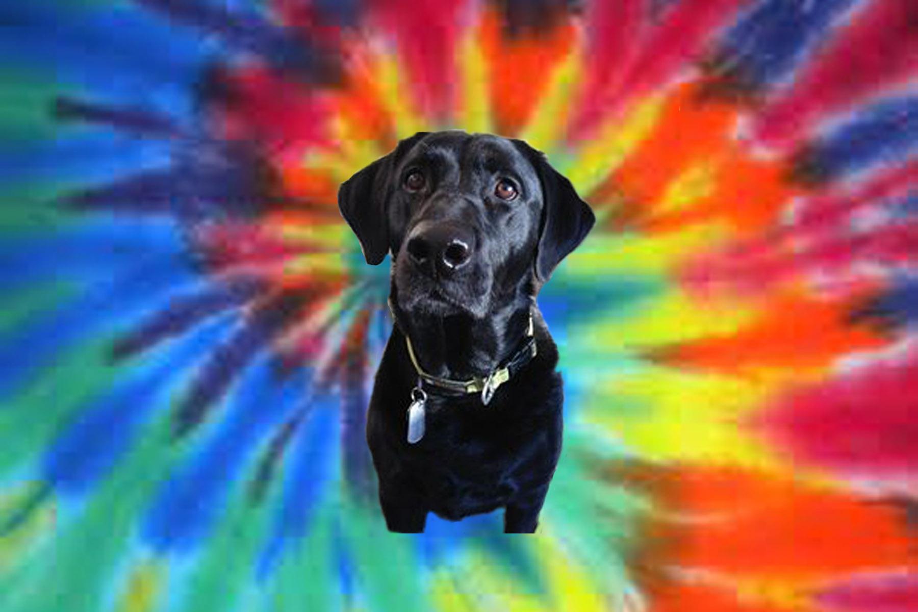 Dog of the Week: Jackson
