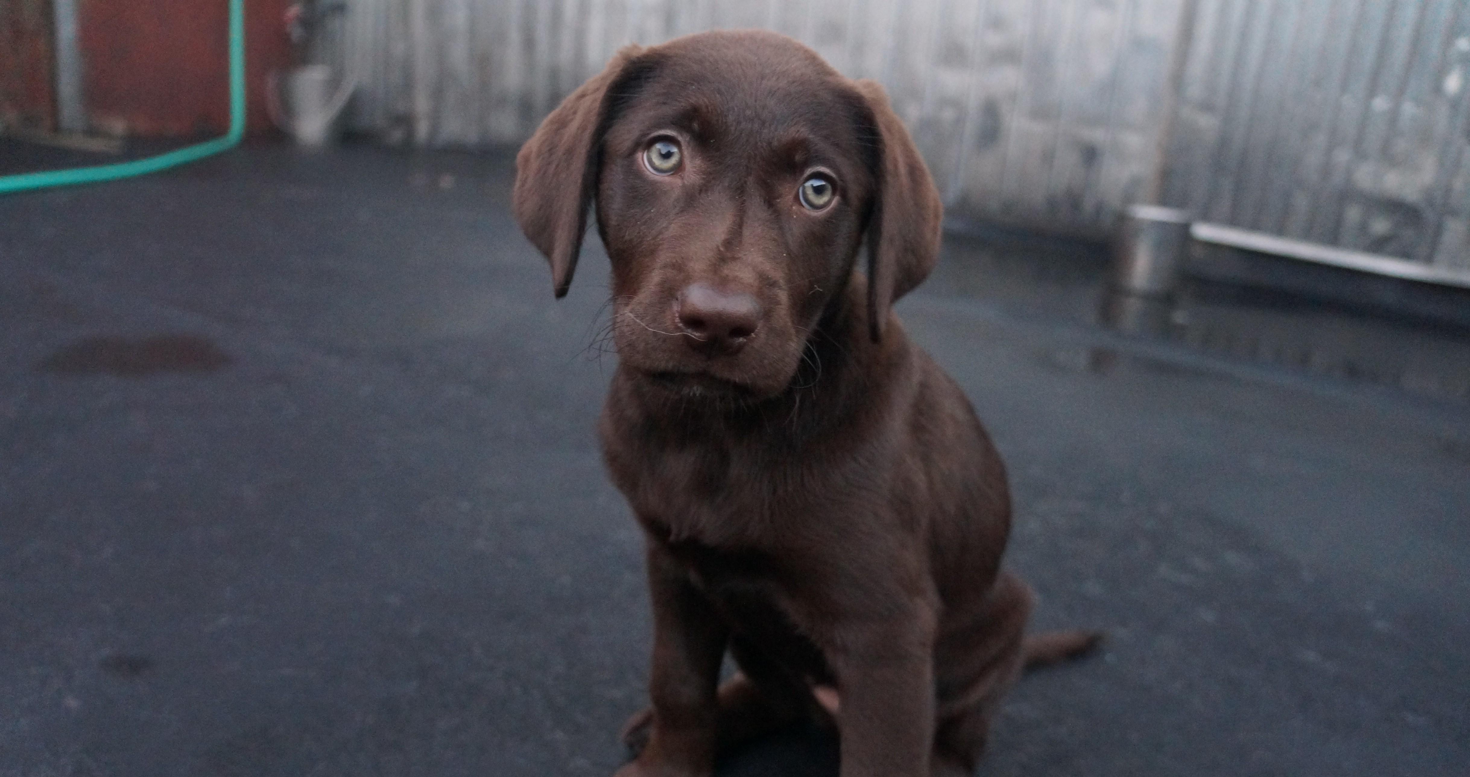 Dog of the Week: Missy