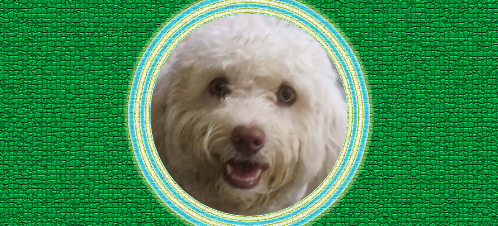 Dog of the Week: Andy