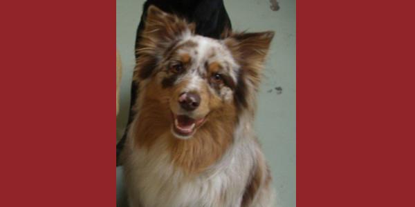 Dog of the Week: Sophie