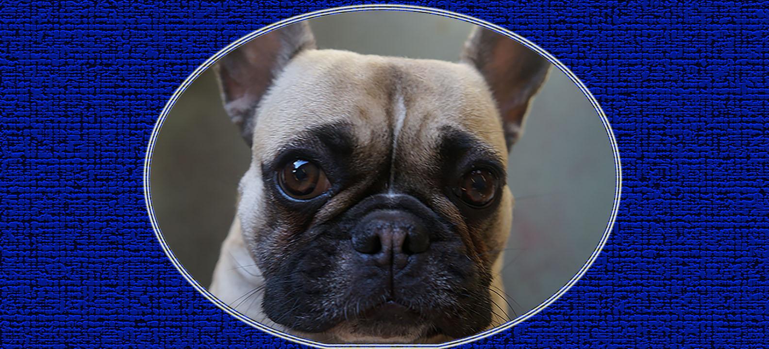 Dog of the Week: Ella
