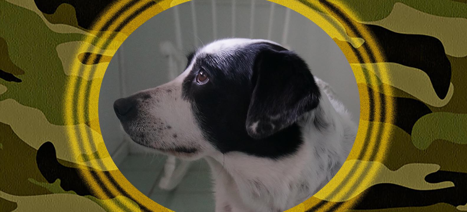 Dog of the Week: Jane