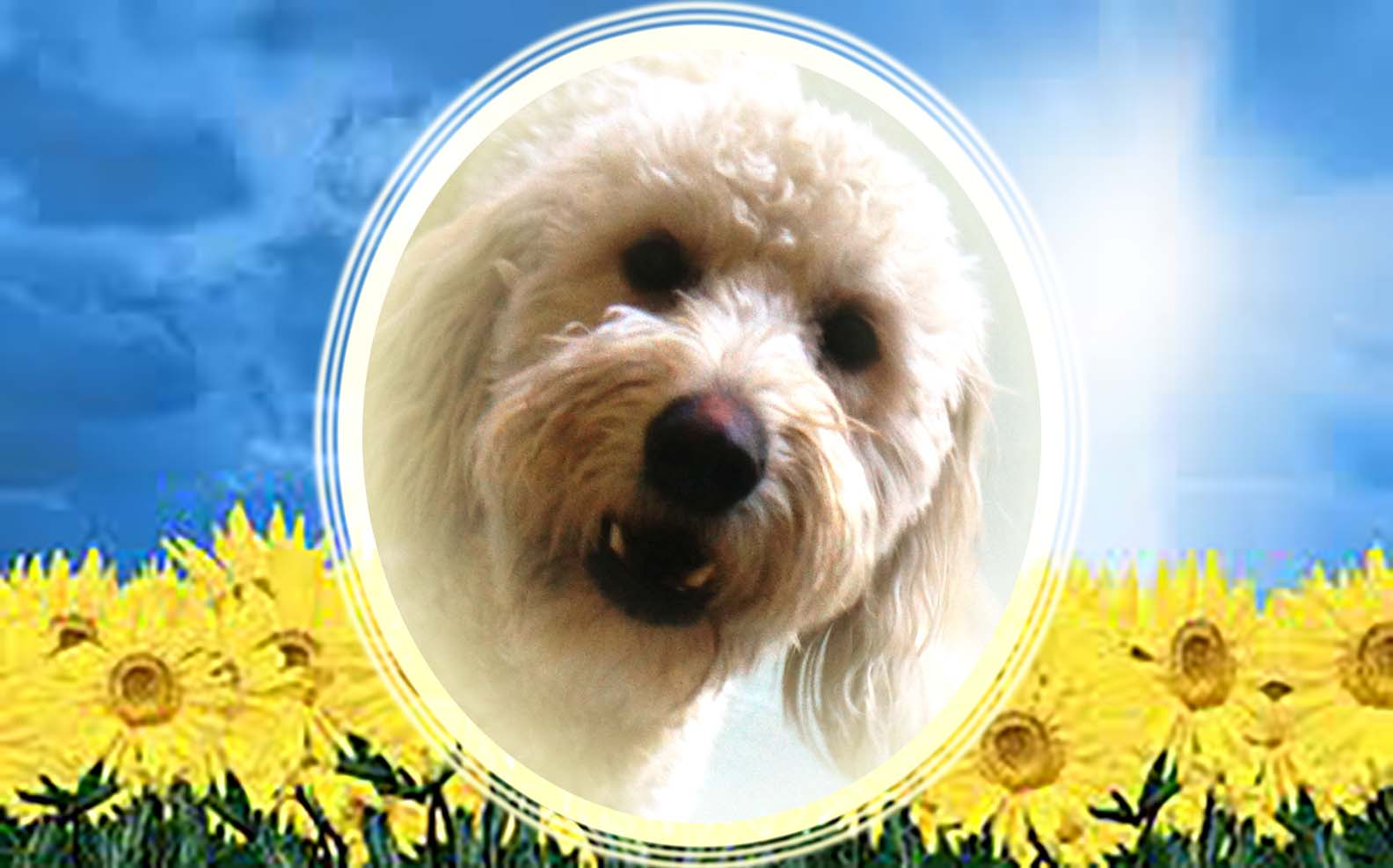 Dog of the Week: Bailey B.