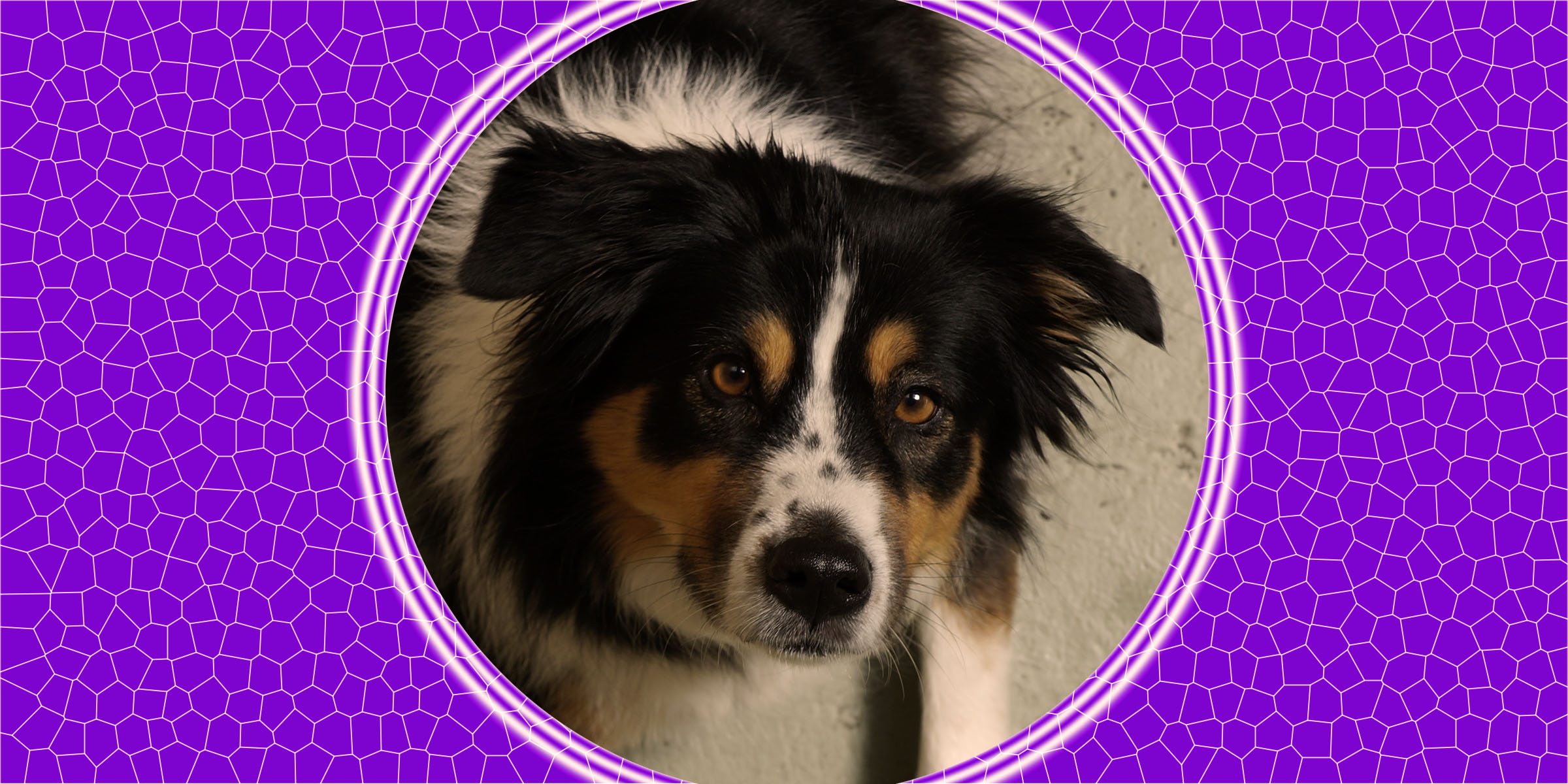 Dog of the Week: Montanna