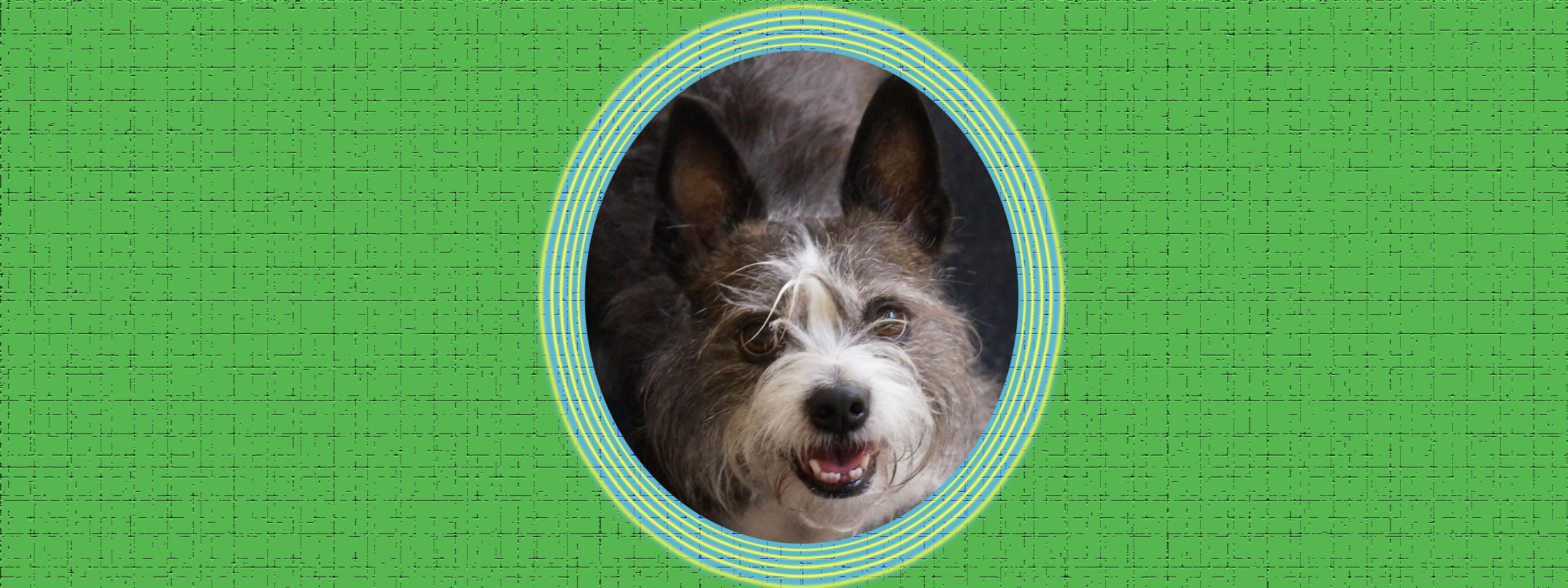 Dog of the Week: Scruffy