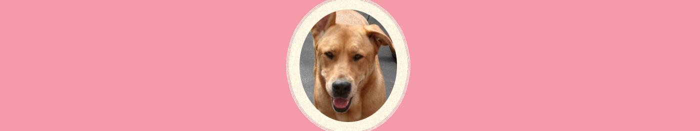 Dog of the Week: Kihei