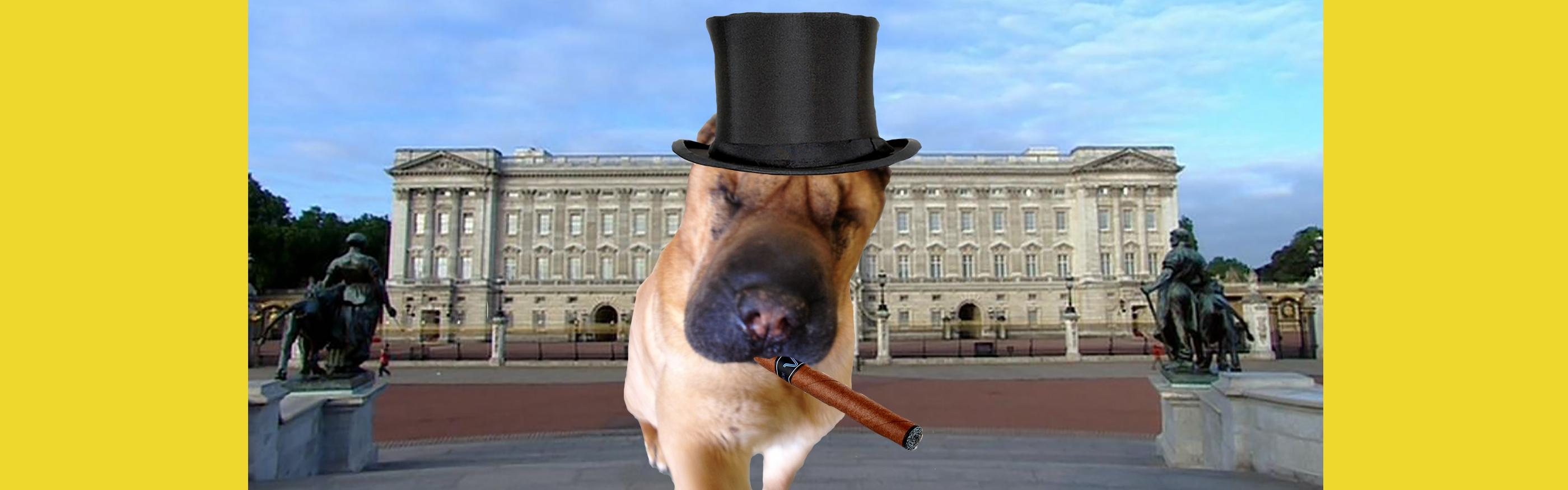 Dog of the Week: Winston