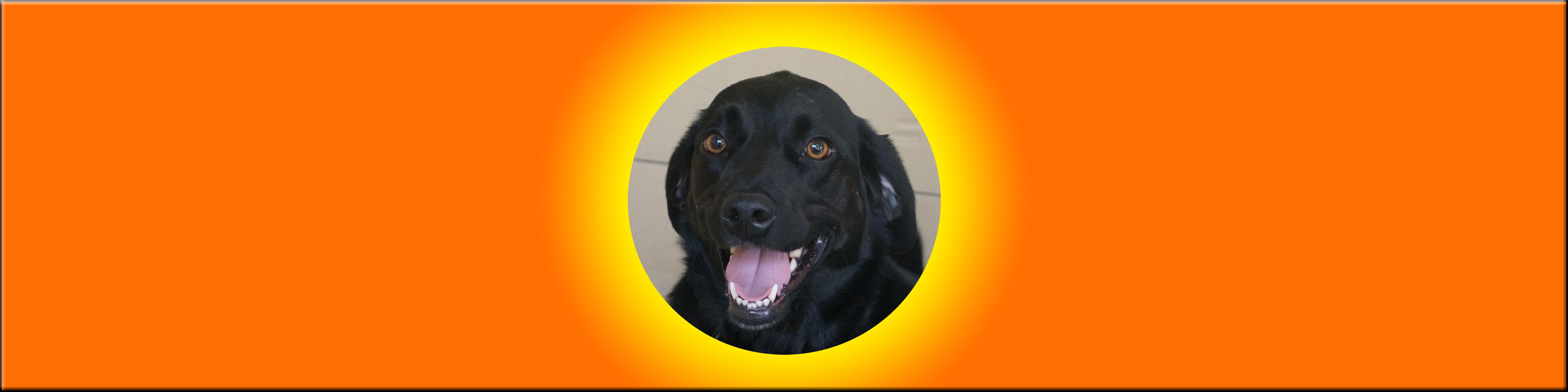 Dog of the Week: Finn