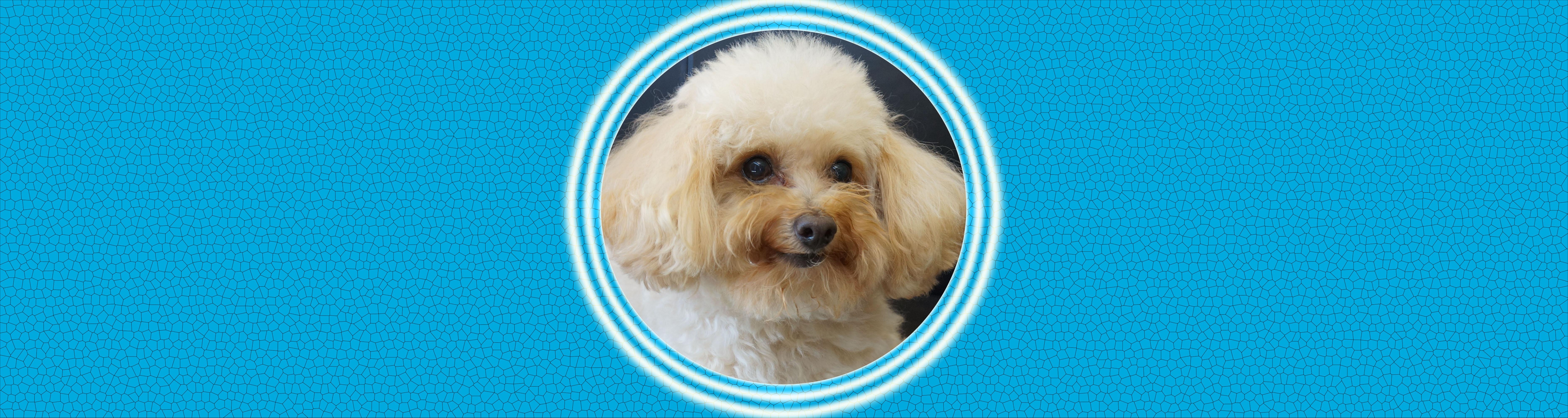 Dog of the Week: Jessie