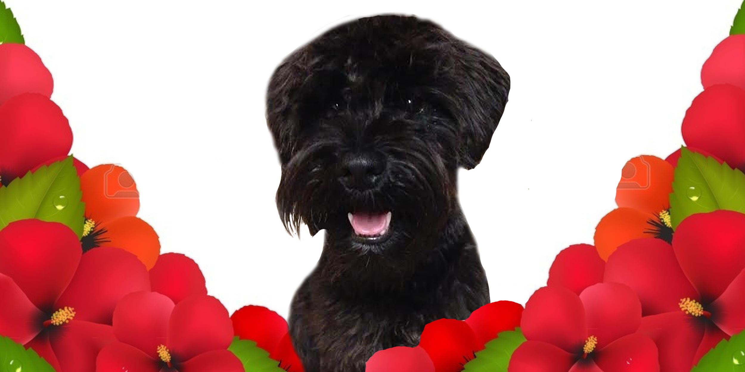 Dog of the Week: Kona