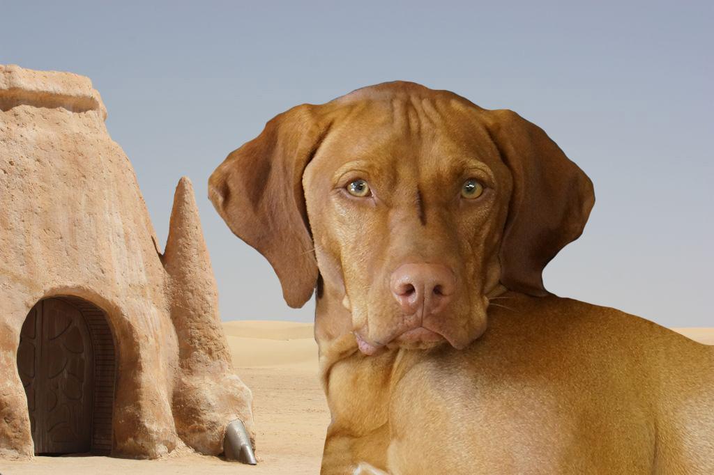 Dog of the Week: Obi