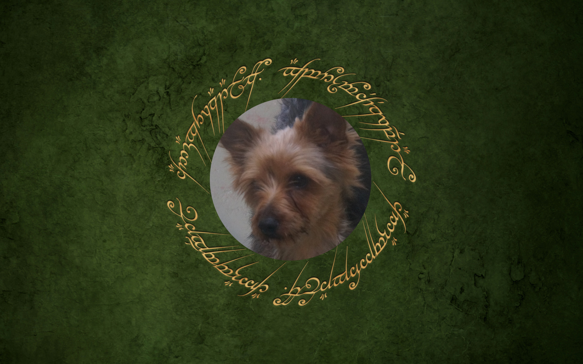 Dog of the Week: Samwise