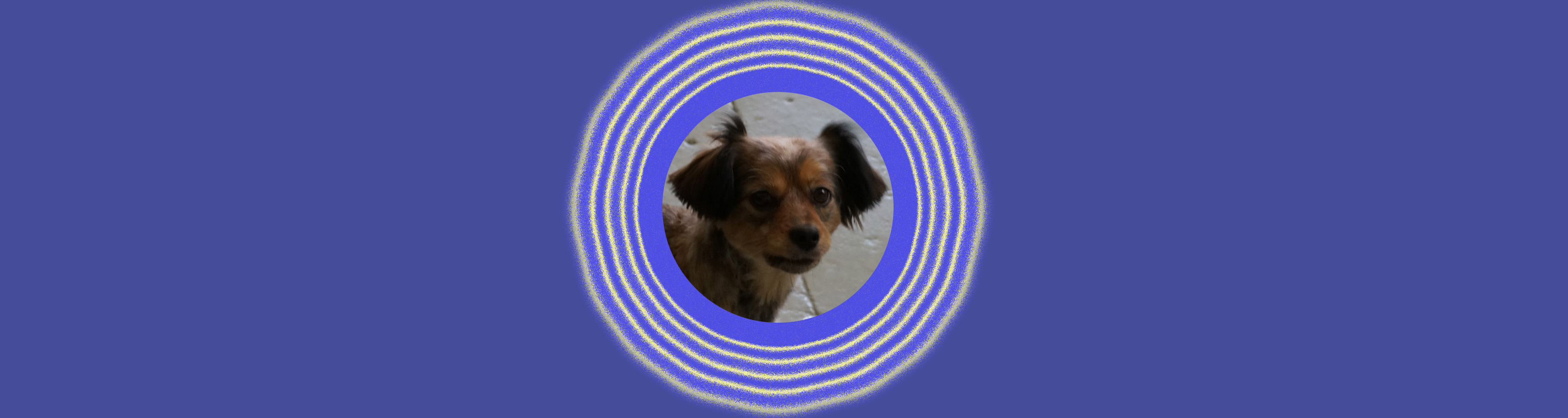 Dog of the Week: Toby