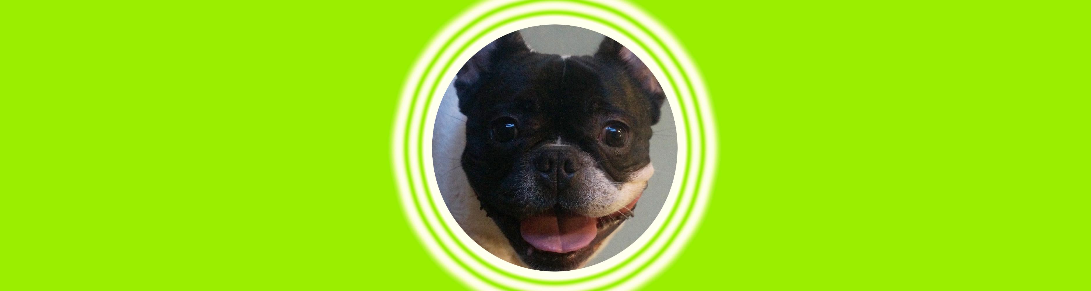 Dog of the Week: Bosley