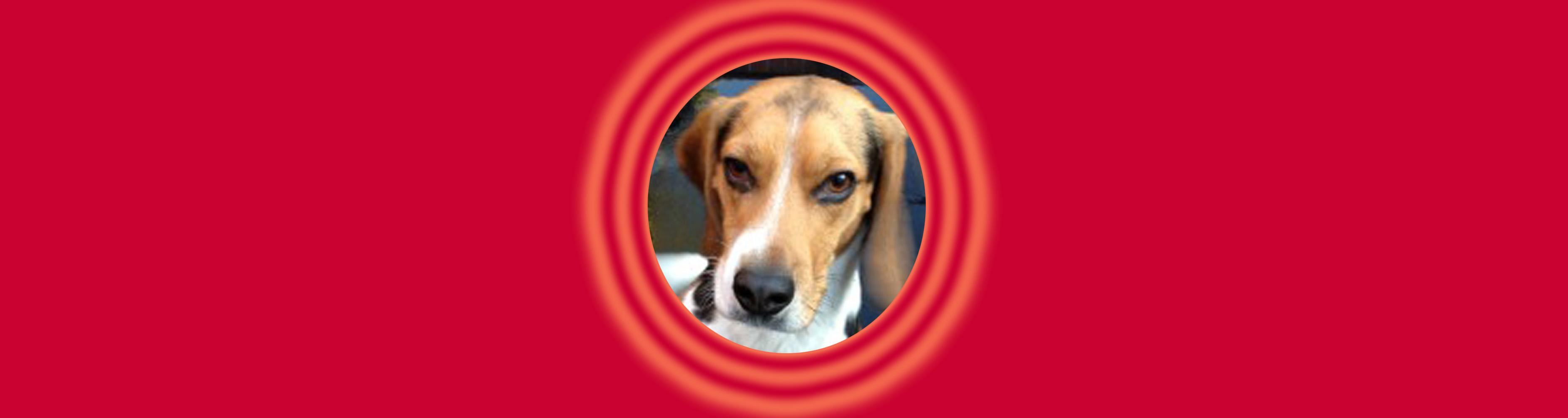 Dog of the Week: Dexter