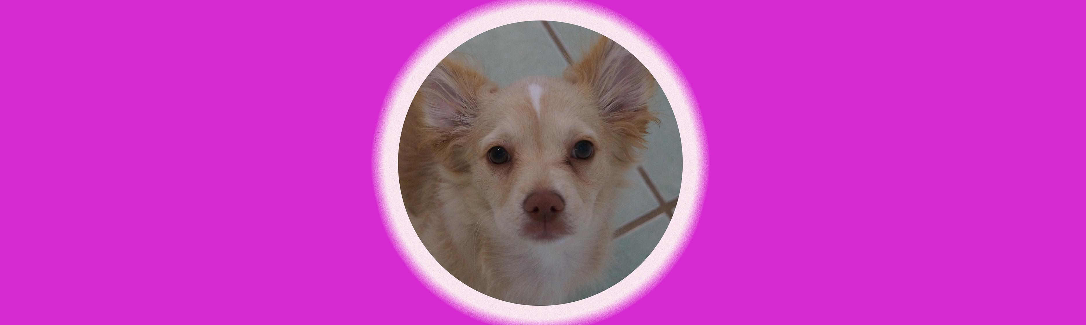 Dog of the Week: Mochi