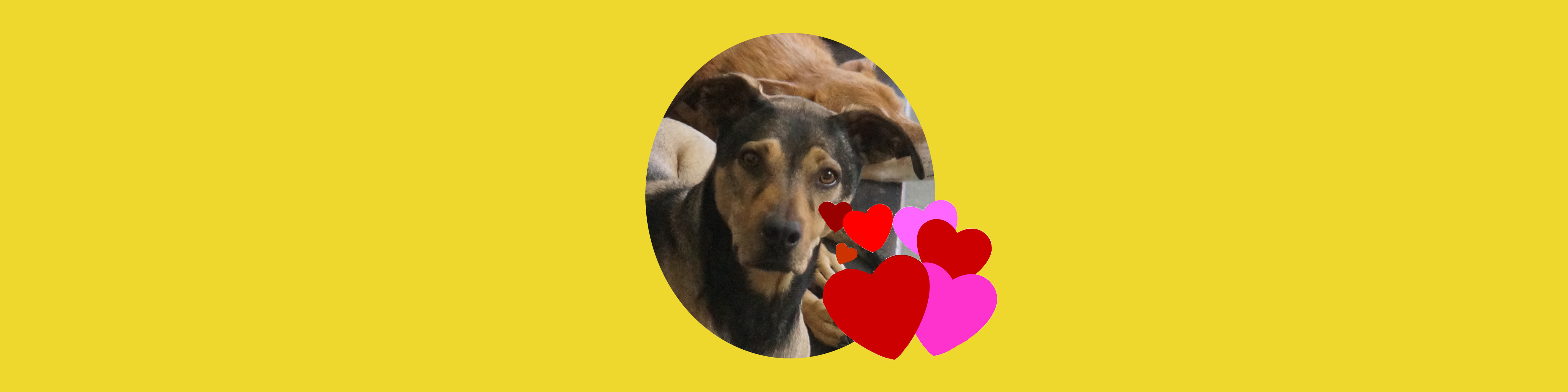 Dog of the Week: Mooshie