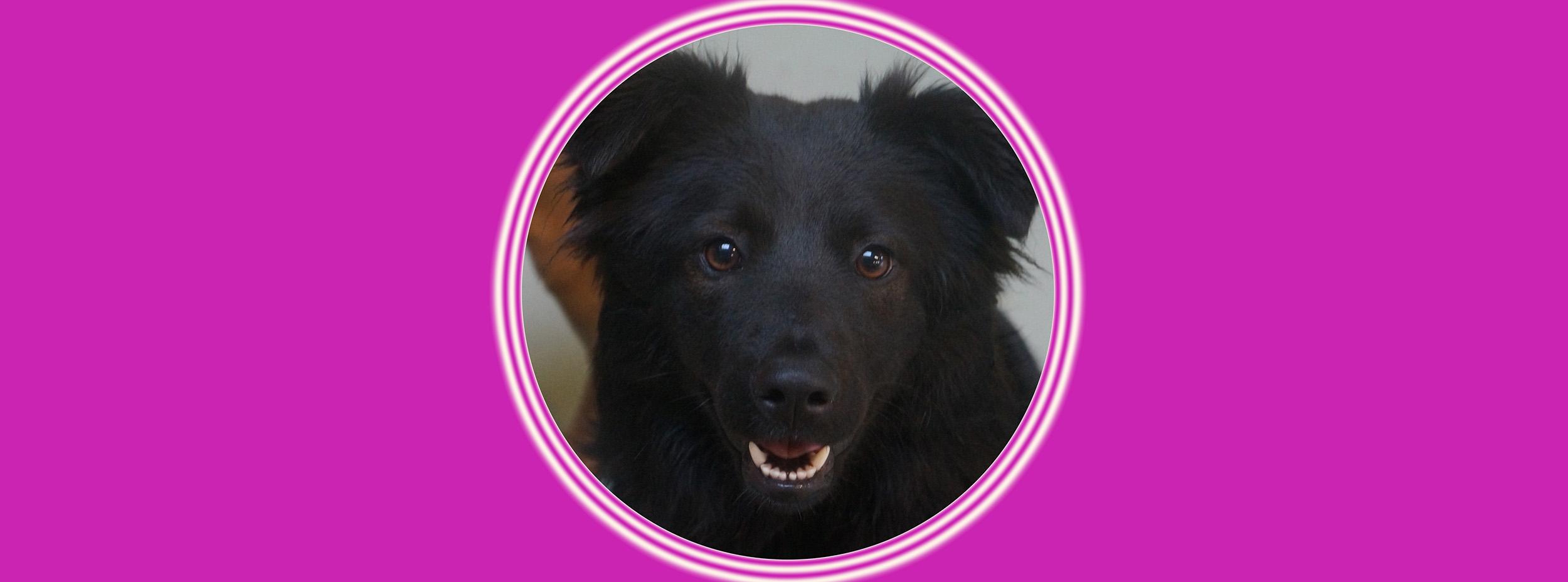 Dog of the Week: Moxie
