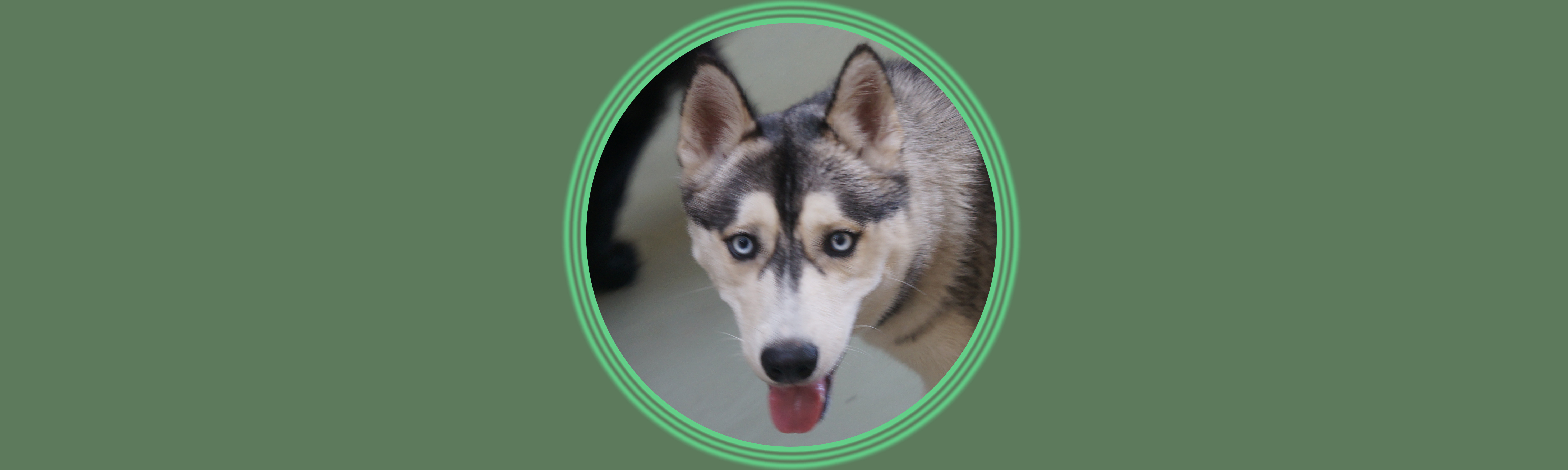 Dog of the Week: Miles